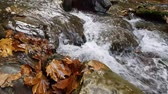naturale : A river flows with sound over rocks in autumn. Forest stream running over rocks. Pure fresh water and autumn leaves in forest. Stock Footage