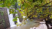 naturale : Waterfall flowing among trees. Stock Footage