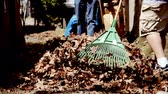 осень : Raking leaves. Стоковые видеозаписи