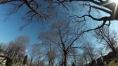 halott : Driving through a cemetery on a crisp winters day.Looking up at the branches on trees.Dramatic fish eye lens.