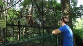 olhar : A man looks at a caged monkey. Stock Footage