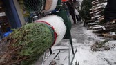 file : NEW YORK CITY - Circa December, 2013 - A Christmas tree salesman wraps a tree for delivery to a customer.
