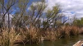 louisiana :  Passengers perspective of riding an airboat through the lakes, swamps and bayous of Louisiana. Stock Footage