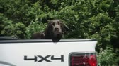 jezdec :  A black dog in the bed of a moving truck on a highway.