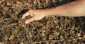 alcance : A man inspects a dead leaf bed.