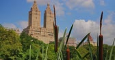 NEW YORK - Circa July, 2016 - A day establishing shot of upscale apartment buildings near Central Park as seen through cattails near the Lake.