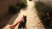 pull forward : A dog pulls a bicyclist outside on a typical Arizona neighborhood sidewalk. Stock Footage