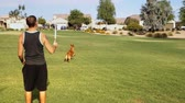 A young male millennial plays ball with his dog in a typical Arizona neighborhood yard. Stock Footage