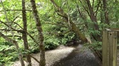 A daytime establishing shot of a creek near the fish hatchery in Issaquah, Washington. Stock Footage