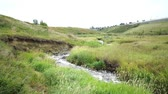 colline : Small stream in park in Calgary, alberta Vidéos Libres De Droits