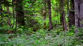 Scenic panorama of green forest thicket in summer
