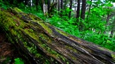 Scenic view of green forest and log with moss