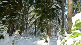 Fantastic winter forest covered with snow