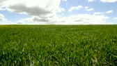 Crop field, environment concept Stock Footage