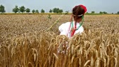 gelenek ve görenekler : Girl in field of wheat ; Girls in national costumes walks field of ripened grain,in slow motion video clip.