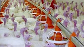 Turkeys for fattening ; Facility on the poultry farm specializing in breeding turkeys