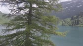 bosques : lake in the swiss mountains Stock Footage