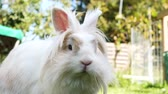 white rabbit in a garden 動画素材