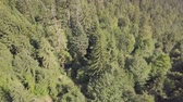 szwecja : Drone flight over a forest in a hilly area