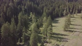 bosques : flying over the last trees before the treeline Stock Footage