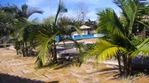 santa catarina : Small Coconut Trees By The Pool Side - Moving Towards