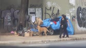 buidling : Homeless Man Living On The Street With A Brown Dog