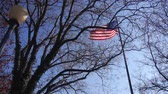 government district : American Flag Behind Tree Branches In Black Light - Static