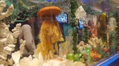 dc : Aquarium Exposition Near People - Pan - Left To Right