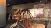 government district : Dinosaur Skeletons Exposed In Museum - Slide - Right To Left