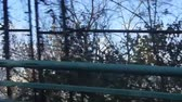 мечты : Bridge Fence In Front Of Flora And City - Slide - Right To Left