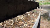 ambiental : Water pollution with garbage, plastic and human waste waterfall in Mexico City Sewer system CA 2014
