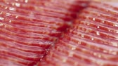 conservado : Vacuum packed slices of salami sausage circling closeup