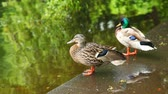 sideview : two ducks are standing near pond in  park