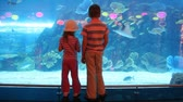 reflexo : two children at aquarium speaking with each other, back view Stock Footage