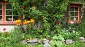 entwine : Norwegian country house among plants entwine walls, shown in motion