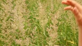 haulm : boy is picking off blades of grass on a hot summer day. Stock Footage