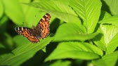 grange : beautiful butterfly sits on succulent green leaves