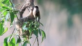 pintos : Remez bird in spring has built an unusual nest
