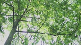 thajsko : Nature background. beautiful sunshine through the tree in Bangkok, Thailand. shot with RED Camera