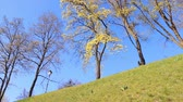 spring flowering trees on the green hill