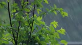 green bush under heavy rain