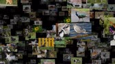 move left : Photo stream of animals moving LEFT, seamless loop Stock Footage