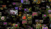 goździk : Photo stream of flowers moving OUT, seamless loop Wideo