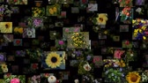 goździk : Photo stream of flowers moving DOWN, seamless loop
