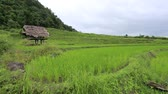 gwóżdź : Rice terraces