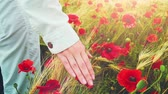 flor cabeça : woman dressed in white clothes is running through a poppies field feeling