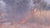 ash : fire burning forest, nature ash Stock Footage