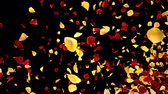 Romantic flying yellow red rose flower petals transition for St. Valentines Day, Mothers Day, wedding anniversary greeting cards, invitation or birthday e-card. 4k alpha channel isolated Stock Footage