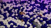 Young asian boy in ball pit