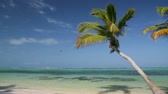waves : Palm on caribbean beach Stock Footage